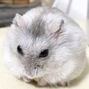 FPハム子のブログ
