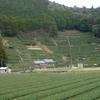 静岡の茶畑・色な場所の思い出・緑2…