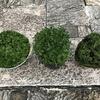 植物の切り戻し作業がストレス解消になる!