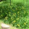 江津湖近辺の花