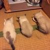 【保護猫】病院連れて行きました。