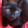 今日の黒猫モモ&白黒猫ナナの動画ー536