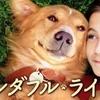 【映画・ネタバレ有】僕のワンダフルライフを観た感想とレビューを書いていきます-ペットを飼った事がある人なら誰でも泣ける-