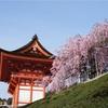 京都の桜 着物散策のすすめ