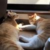 夏の猫たち