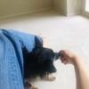 【トレーニングゲーム②】愛犬のお鼻が磁石になる?ドッグトレーナーが教える|マグネットゲーム