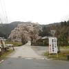 京都桜シリーズ 常照皇寺の九重桜