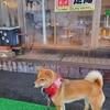 北海道、北湯沢温泉のホロホロ山荘へ犬連れの旅