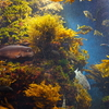 「えのすい」のベストシーズンになりました。藤沢・江ノ島「新江ノ島水族館」