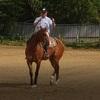 (動画)乗馬を始めてちょうど6ヶ月になりました(65鞍目)