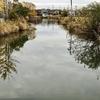 堅田内湖(滋賀県栗東)