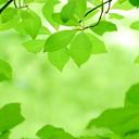 アトピーをサプリメント・食事の栄養効果で改善するための対策ブログ