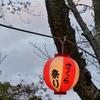 【LUMIXS1】桜を撮りに垣生公園へ
