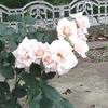 薔薇の香や熟女の匂ひクラーリネット
