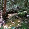 魚屋道から荒地山へのハイキング(その4)宝寿水から黒岩へ