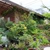 植物とアンティークetc...グリーンギャラリーガーデンズ/八王子
