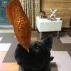 甲斐犬サンとゴーヤの日々〜Σ(-᷅_-᷄๑)傷ンドルッ!