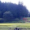 神社神道と教派神道と呼ばれる神道の世界を知っていますか?