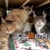 ザ・ノンフィクション「犬と猫の向こう側」後編