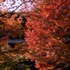 南禅寺の紅葉2013