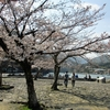 京都 嵐山の桜2018~あでやかに咲きパッと散って~