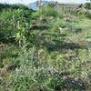 8月の長崎と家庭菜園