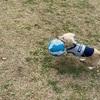 週末の公園でのボール遊び
