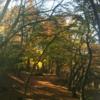 湖東三山紅葉めぐり1 まずは、滋賀県の百済寺(ひゃくさいじ)の紅葉です(^^)