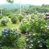 京都から戻って、今日は鹿児島へ
