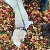 薪ストーブオルドビス紀③ 秋が過ぎ去り、冬到来~ネスターマーティンの焚き付け風景