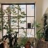 初心者におすすめ 耐寒性 耐陰性のある観葉植物5選