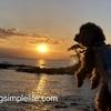 三浦海岸から夕焼け絶景スポット立石駐車場 犬連れ旅行④