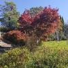 Monet Garden in November