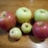 伊那谷のリンゴ