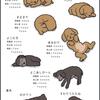 犬の寝姿と心理状態