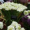 Hampton Court Palace Flower Show 2016