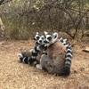 動物と自然の宝庫 マダガスカルへ行ってきた①