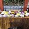 【鎌倉いいね】鎌倉の動画あり〼お出かけせずに楽しむ鎌倉の世界へご招待。