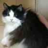 うち猫ご飯と、メニニャンeye。
