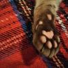 猫ブログ_キレイな肉球 #オシキャット