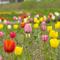 子ども雑学(4月編)チューリップの不思議、童謡「春の小川」など