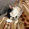 【猫画像】うちの白黒猫とキジトラ猫が可愛いから自慢したい件