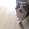 【愛猫日記】毎日アンヌさん#134