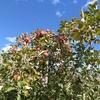 イースタン・タウンシップスで秋の色を探したが、まだ早かった。