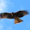 【翼を授かる?】レッドブル・エナジードリンク 効能・効果とは?中毒の危険性は?