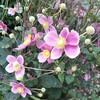 茶道 秋の茶花