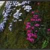 奈良県 『室生寺』 石楠花の見頃も間もなく