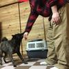 甲斐犬サン、妹のダイエットに協力するの巻〜目指セ、マイナスサンkg٩( 'ω' )و❗️