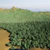 Twinmotionの森林描画に関する一つの解決策