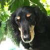 犬の鼻とゴーヤと私。初収穫&6レシピ
